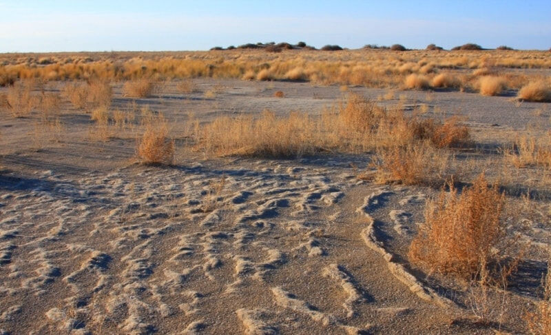 природная зона пустыня (главный ключ)