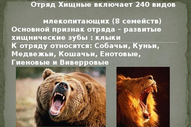 Презентация по биологии Класс Млекопитающие, отряд Хищные