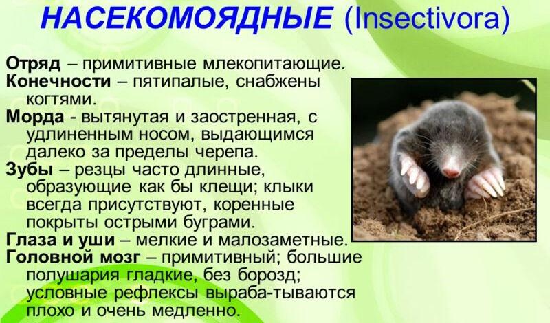 Презентация на тему: Презентация по биологии на тему ...