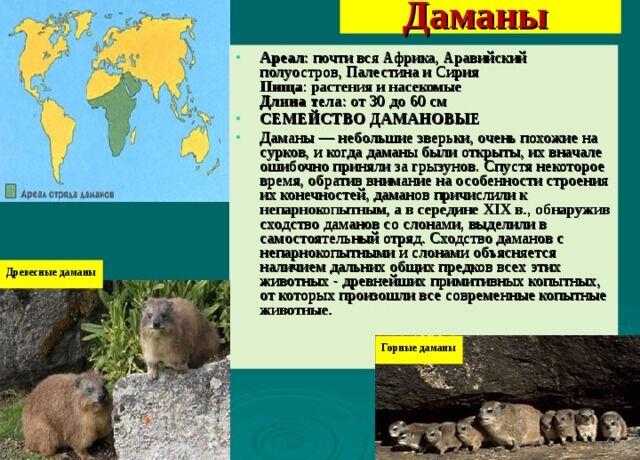 Презентация для 7 класса по биологии на тему Значение млекопитающих ...