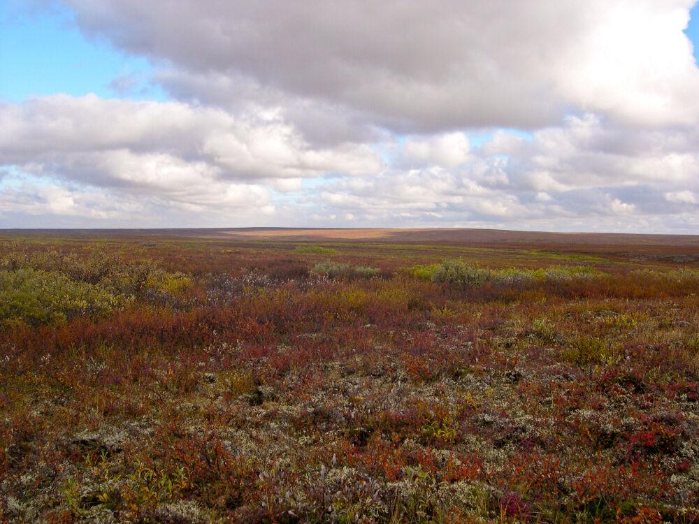 Файл:Bolshezemelskaja tundra 1.JPG — Википедия