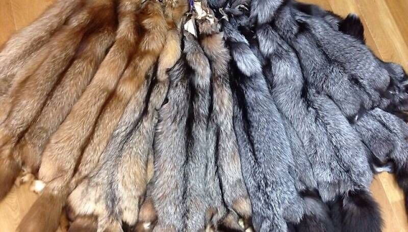Создание в Якутии центра сдачи пушнины выведет экспорт меха из тени ...