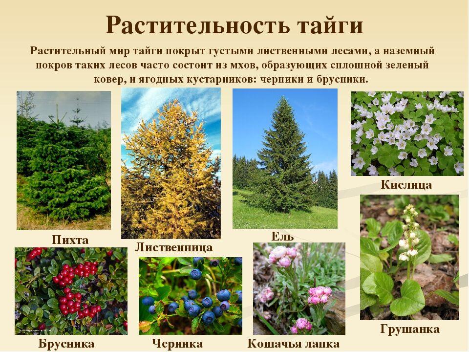 Презентация по биологии на тему Природные зоны России (5 класс)