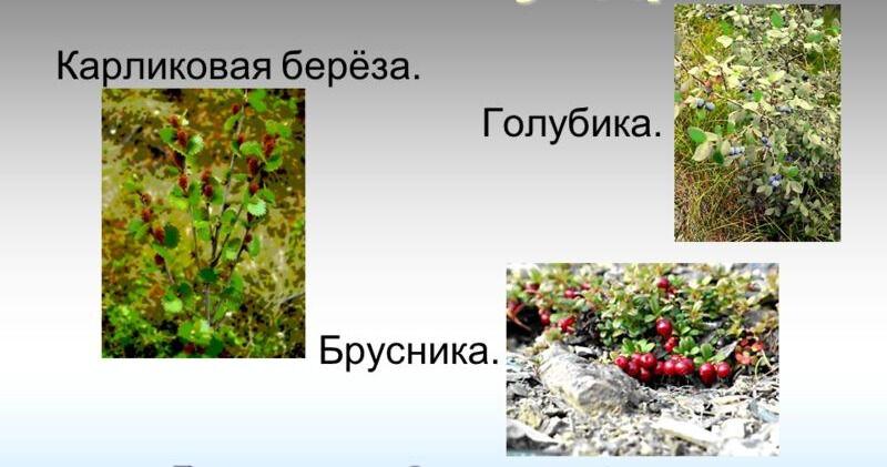 природные зоны россии 4 класс окружающий мир