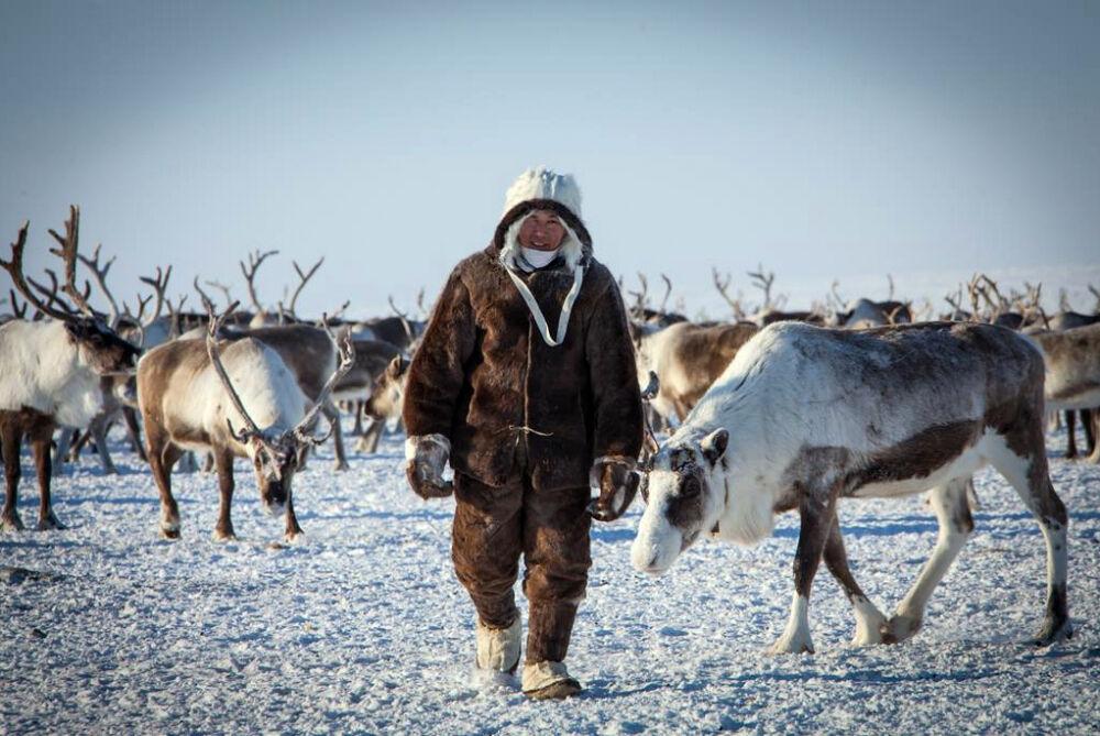 В Якутии разработают профстандарты для оленеводов и коневодов | ЯСИА