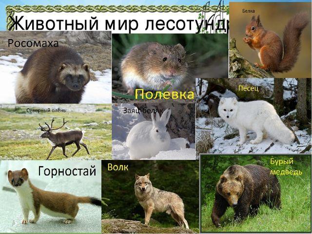 Презентация Природа Красноярского края