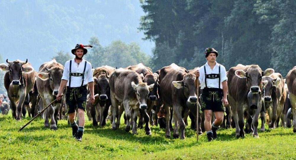 сельское хозяйство европы (главный ключ)