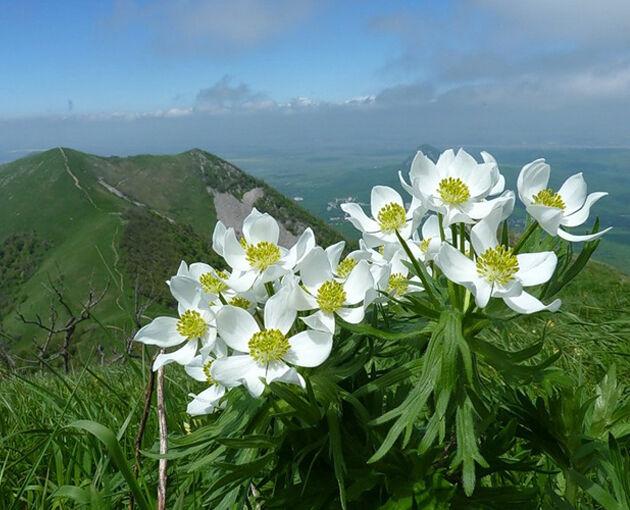 Растения высокогорий Кавказа