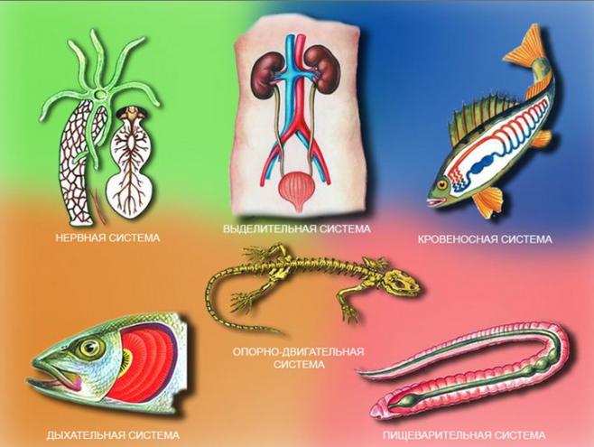 Основные признаки строения организма животных — урок. Биология ...