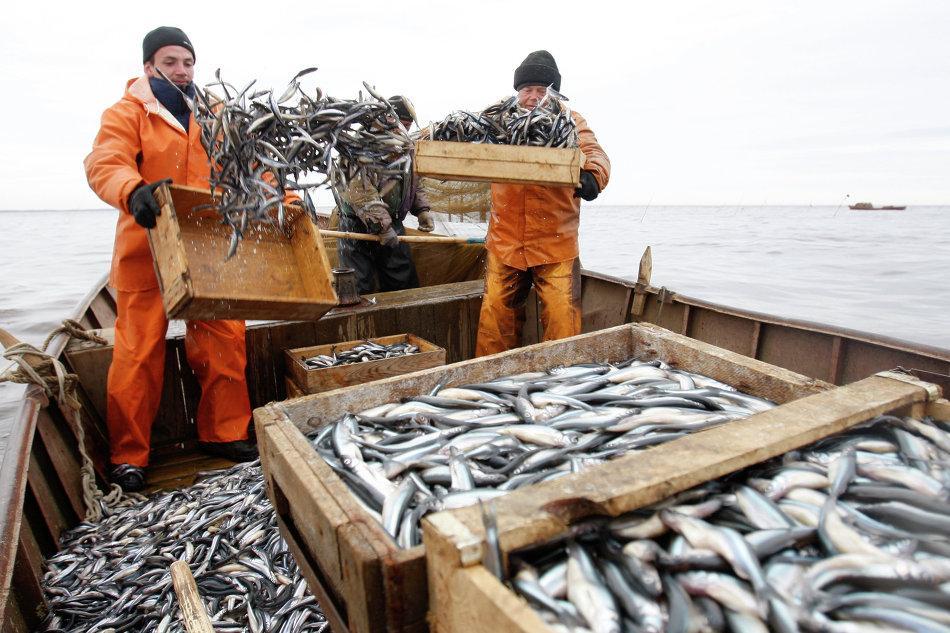 Промышленный вылов рыбы в Крыму значительно вырос - информационный ...