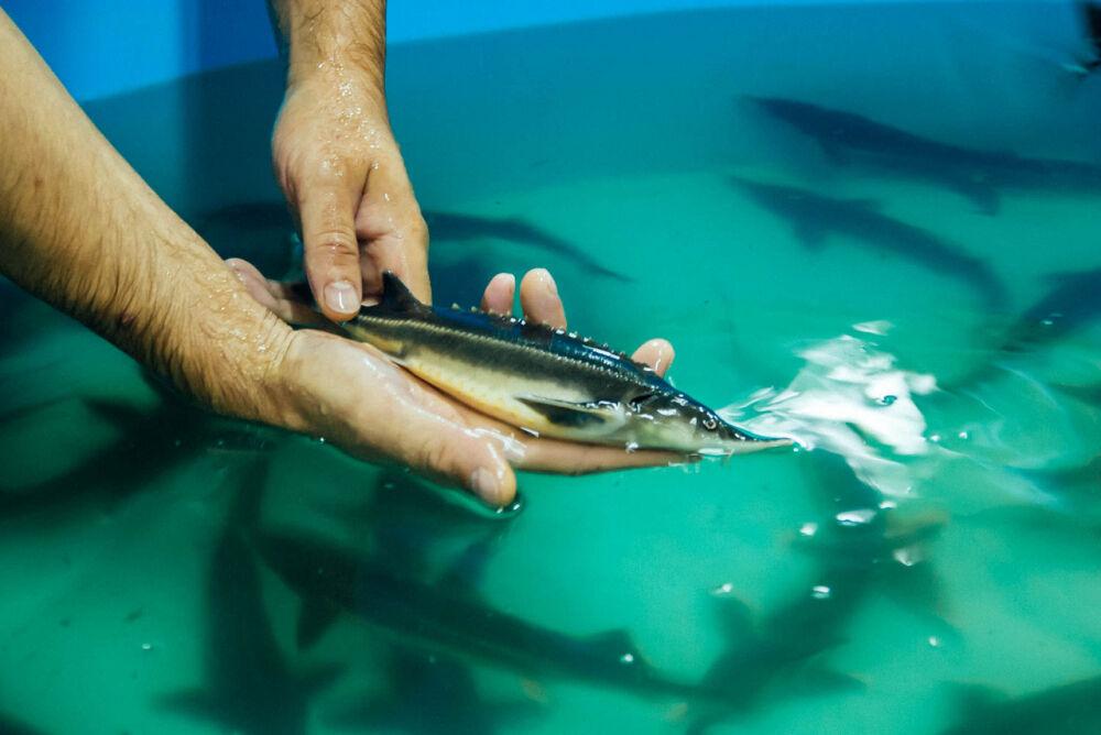 Рыбное хозяйство : продажа, цена в Белгороде. фермерские хозяйства ...