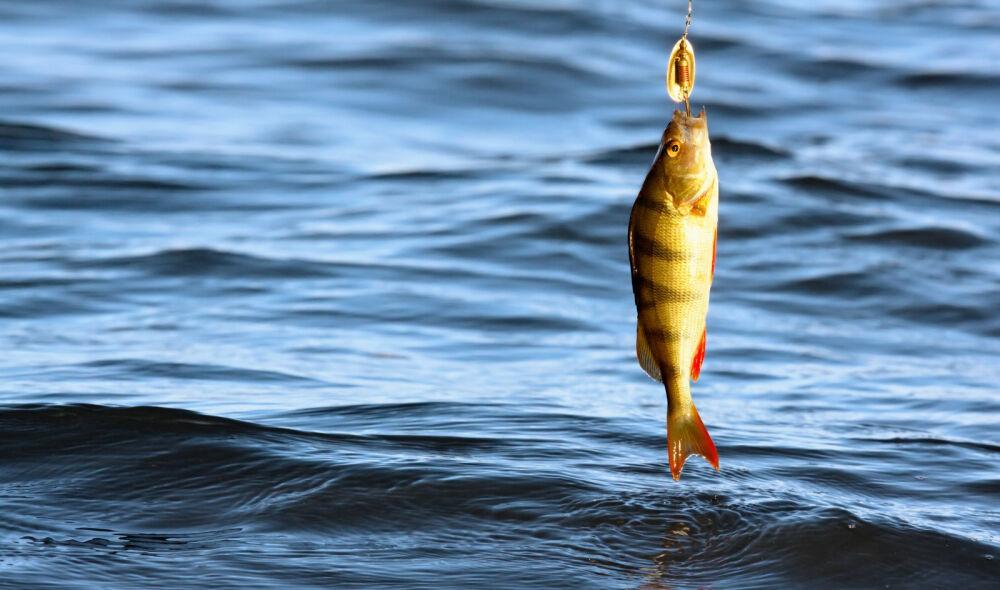 В Калужской области ввели ограничения на рыболовство — Газета ...