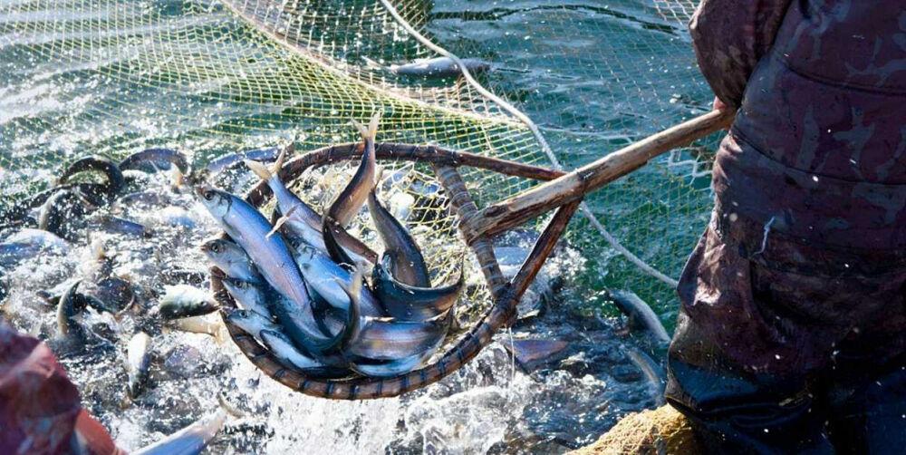В Азовском море начнет действовать запрет на промышленное рыболовство