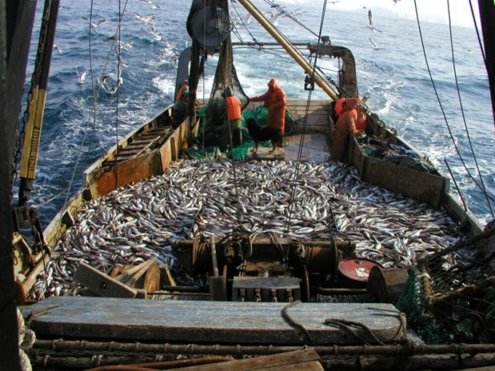 Промышленное рыболовство. Пользователи сайта 123ru.net — все новости ...