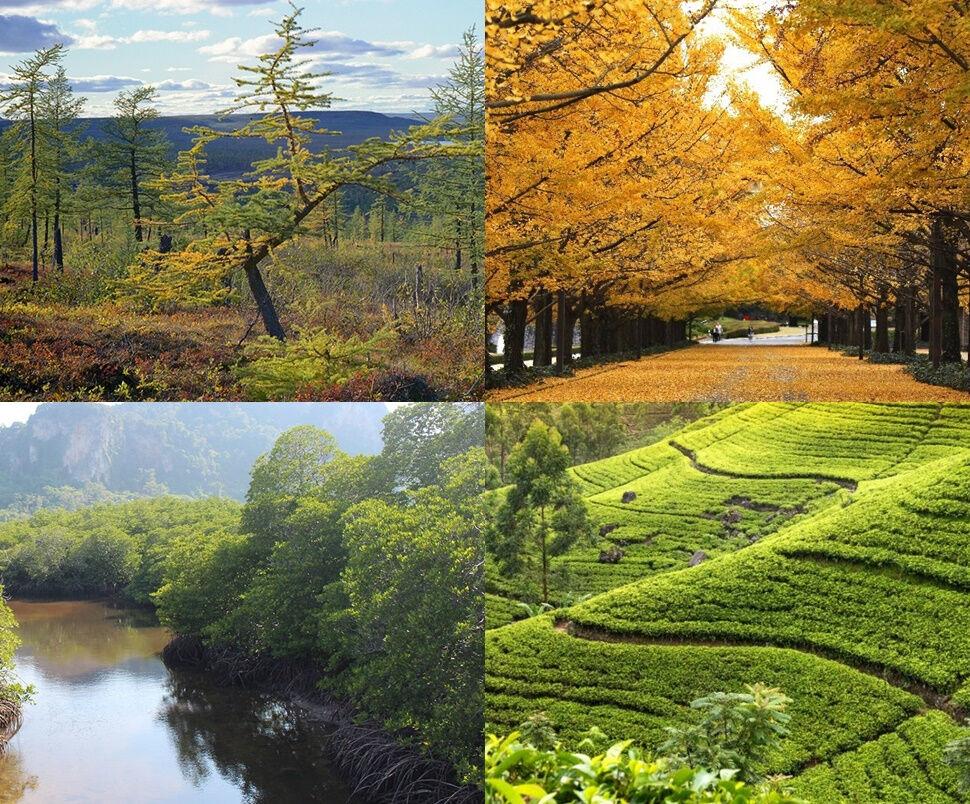 природа азии