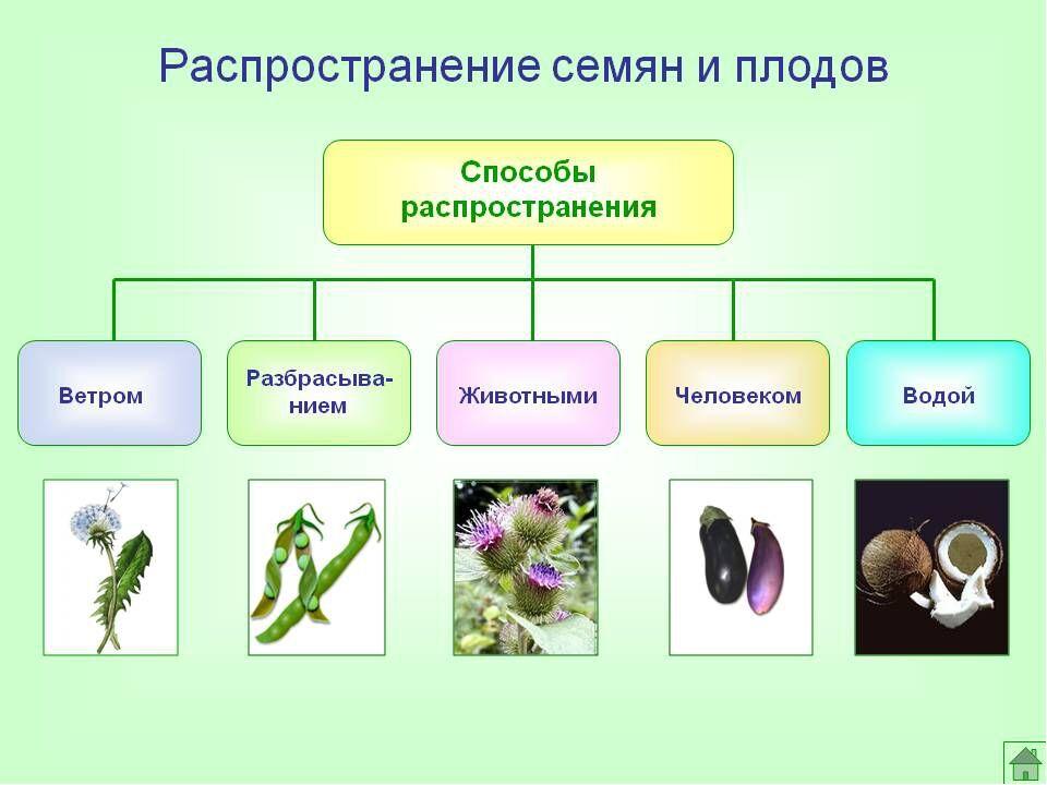 Урок+презентация по биологии для 6 класса «Распространение плодов и ...