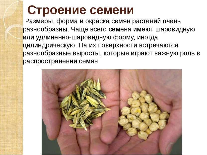 Презентация Семена - скачать бесплатно