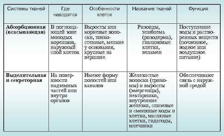 ткани животных и их функции таблица