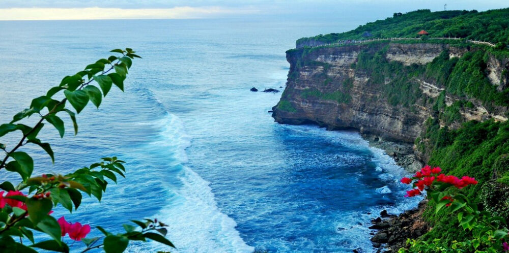 растительность тихого океана