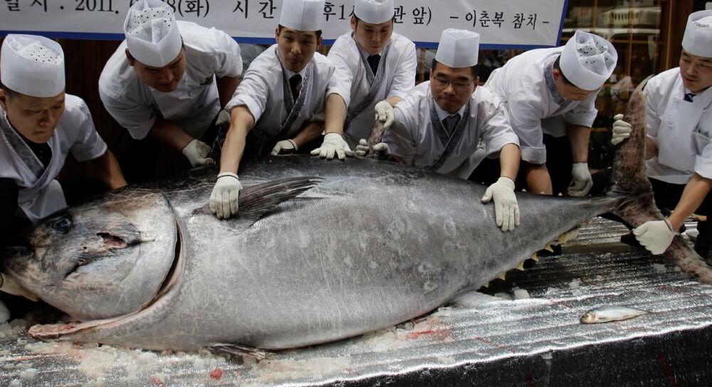 В Японии с аукциона продали самого крупного тунца в истории ...
