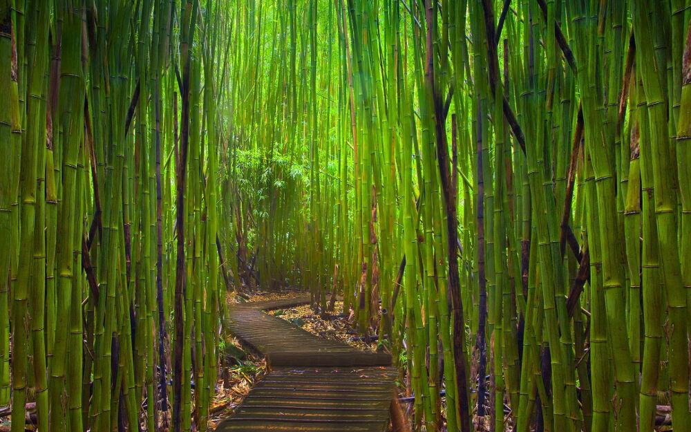В бамбуке счастье