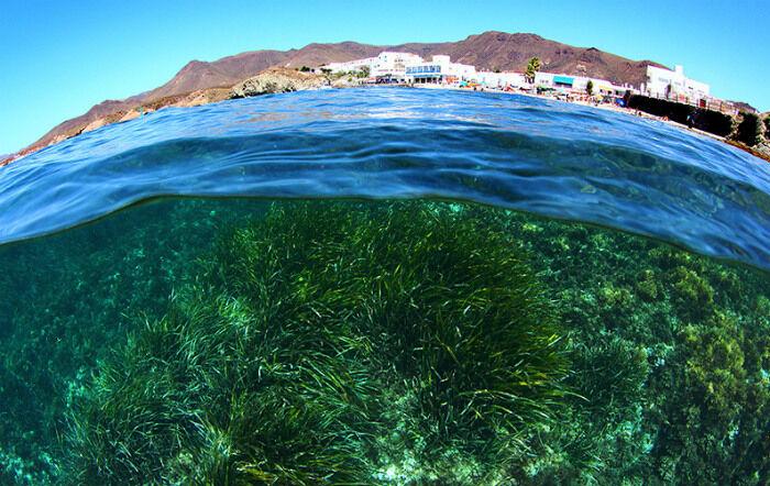 Животные и растения Атлантического океана: фото и описание подводных ...