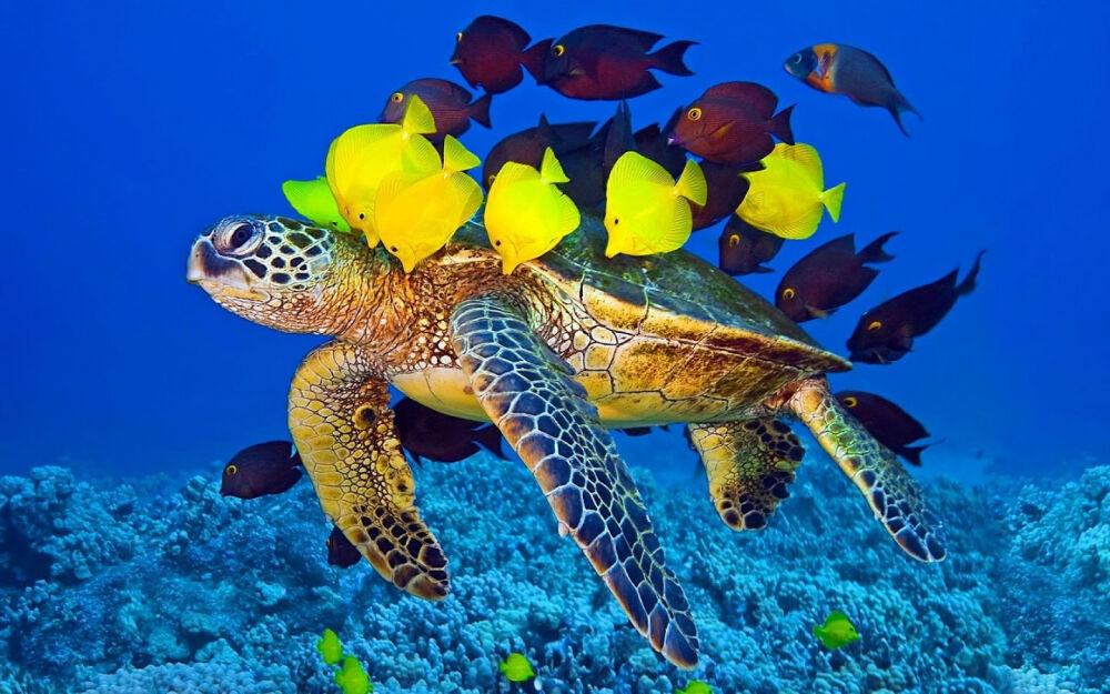разнообразие морских организмов