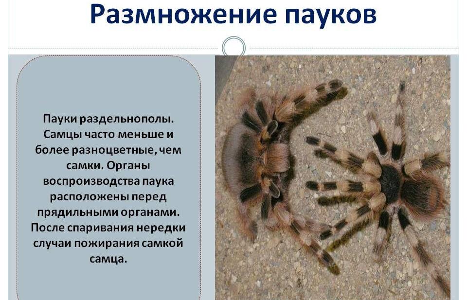 значение пауков (главный ключ)