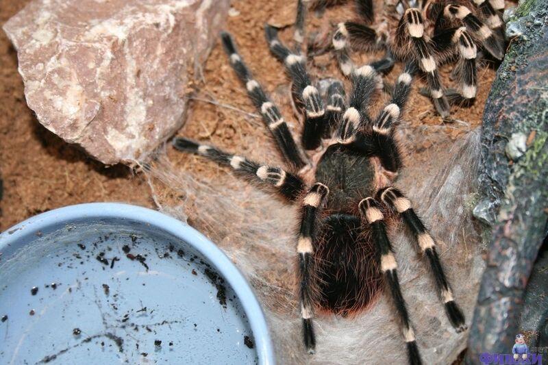 Линька паука (9 фото + видео) » Лента приколов Коляна