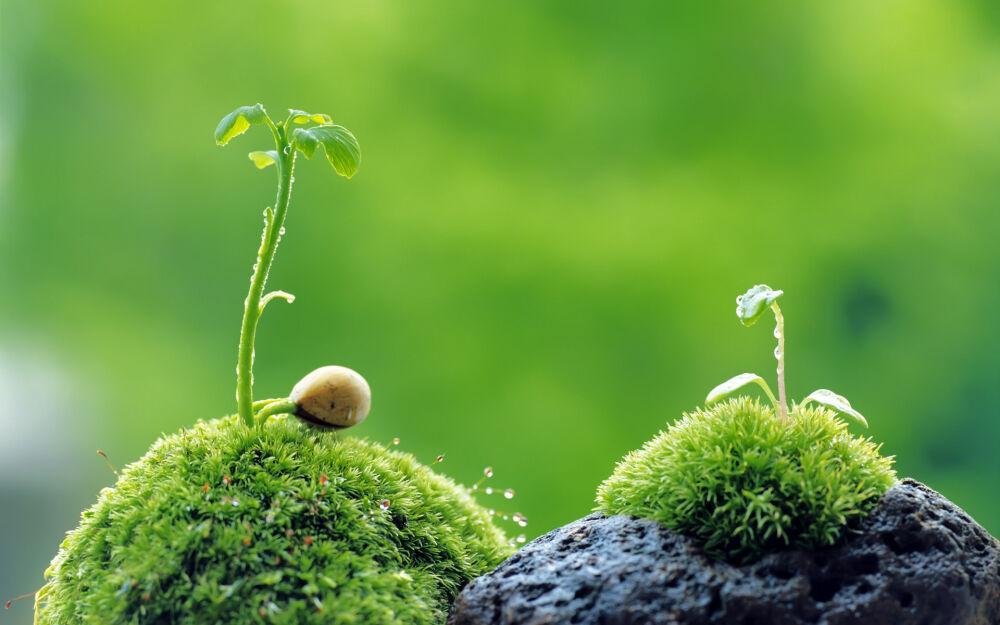 что дают человеку растения