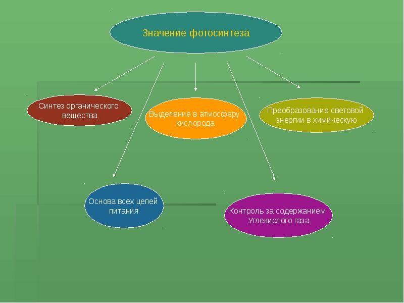 Презентация Фотосинтез - скачать презентацию
