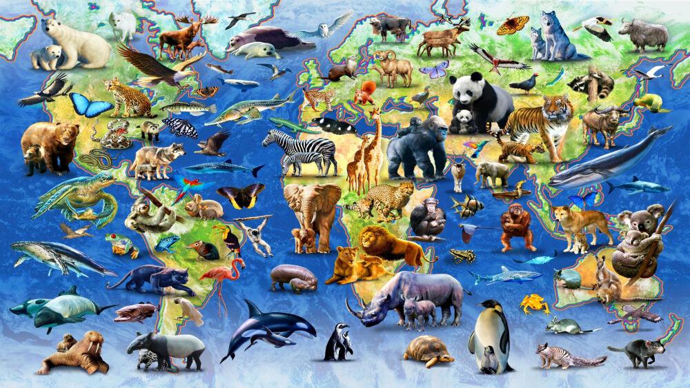 классы животных таблица