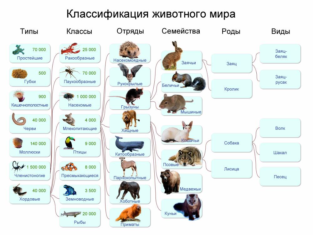 царство животных схема