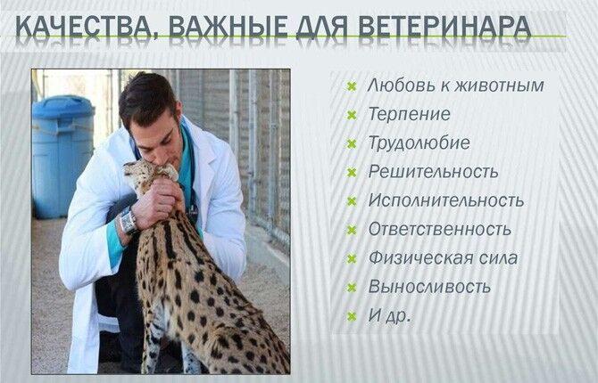 Качества важные для ветеринара